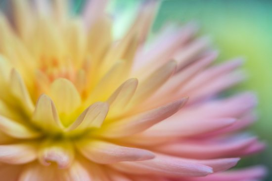 Flower photography with selective focus and narrow DOF with Lensbaby by Anne Belmont
