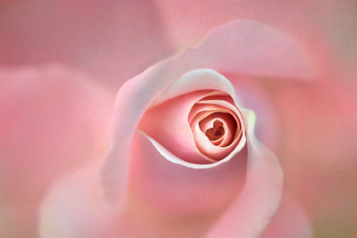 Flower photography with 00mm Macro Photography Lens by Anne Belmont