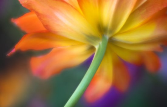 Flower photography composition using the rule of thirds by Anne Belmont
