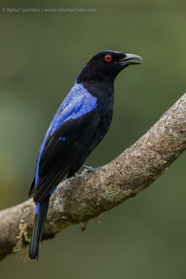 Diagonal bird photography composition by Rahul Sachdev