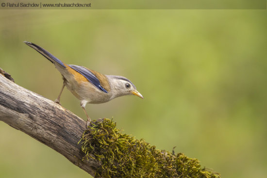 Front lighting for bird photography by Rahul Sachdev