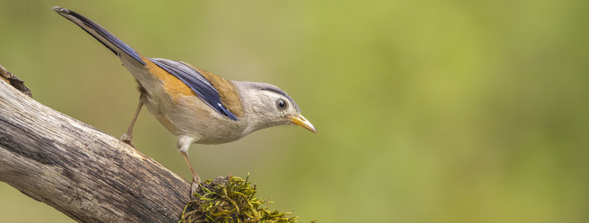 Cover for bird photography blog for beginners by Rahul Schdev