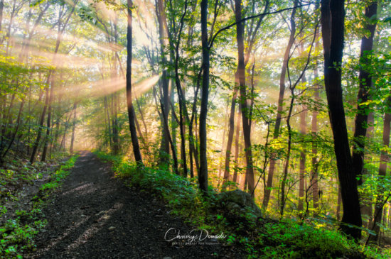 Nature and Landscape Photography by Chrissy Donadi