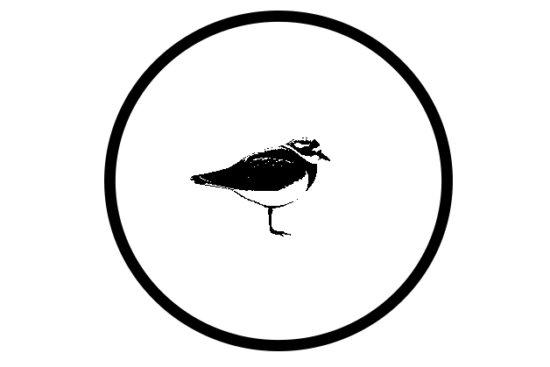 A bird's circle of confidence by Rahul Sachdev