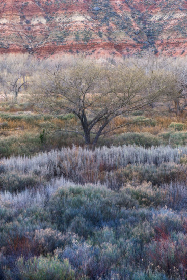 Zion National Park cottonwoods winter colors brush composition