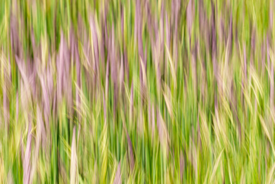 Line in nature photography composition created by intentional camera movement from Grandfather Mountain, North Carolina by Kate Silvia