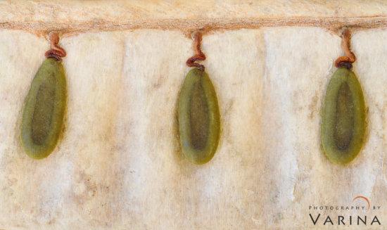 Macro photography of seeds, Big Island, Hawaii