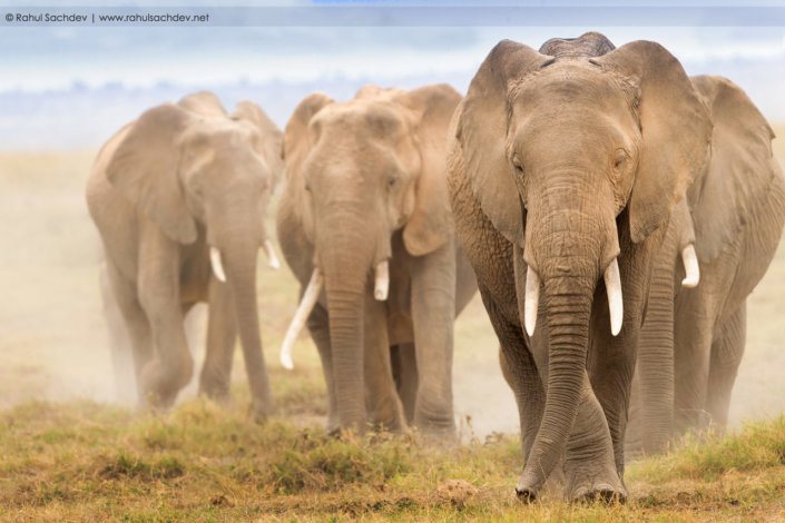 Cover for Wildlife Photography blog post by Rahul Sachdev