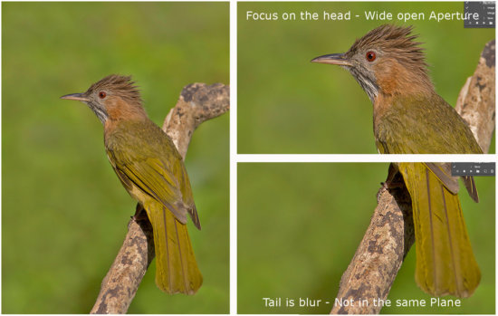Controlling blur in Wildlife Photography with Aperture by Rahul Sachdev