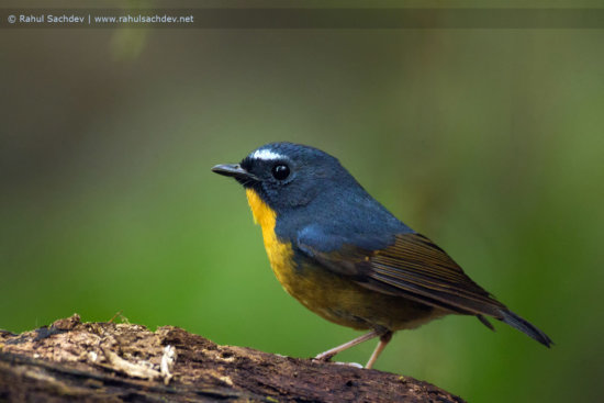 Bird photography with Wide Aperture for narrow DOF