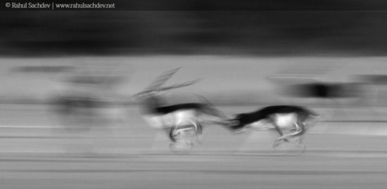 Creative wildlife photography with slow shutter speed with motion blur by Rahul Sachdev