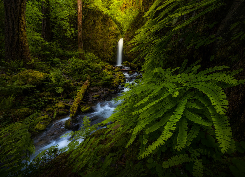 Spring Photography to capture green foliage in forest, by Joshua Snow
