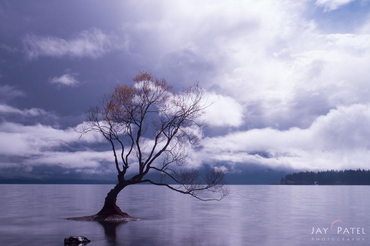 Wanka Tree, New Zealand