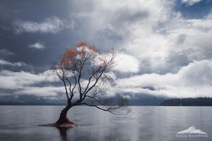 Wanaka Tree, New Zealand photo used in this Photoshop Tutorial