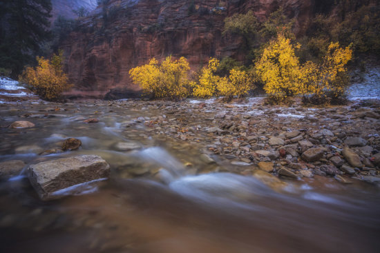 A stream in Zion National Park highlighted with yellow leaves presents a gorgeous photography location