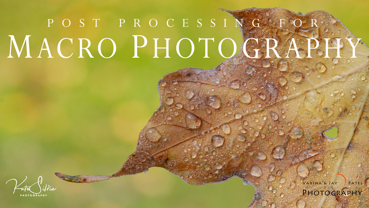 Post Processing Macro Photography Tutorial Cover