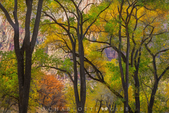 Landscape photography from Zion National Park, Utah by Charlotte Gibb