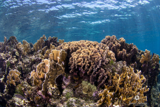Underwater photography: Coral Reef photographed during snorkeling
