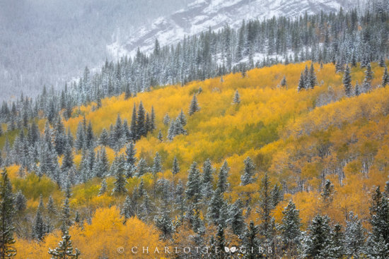 6 Highly Effective Tips for Fall Photography blog article