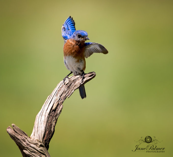 Bird Photography by Jane Palmer