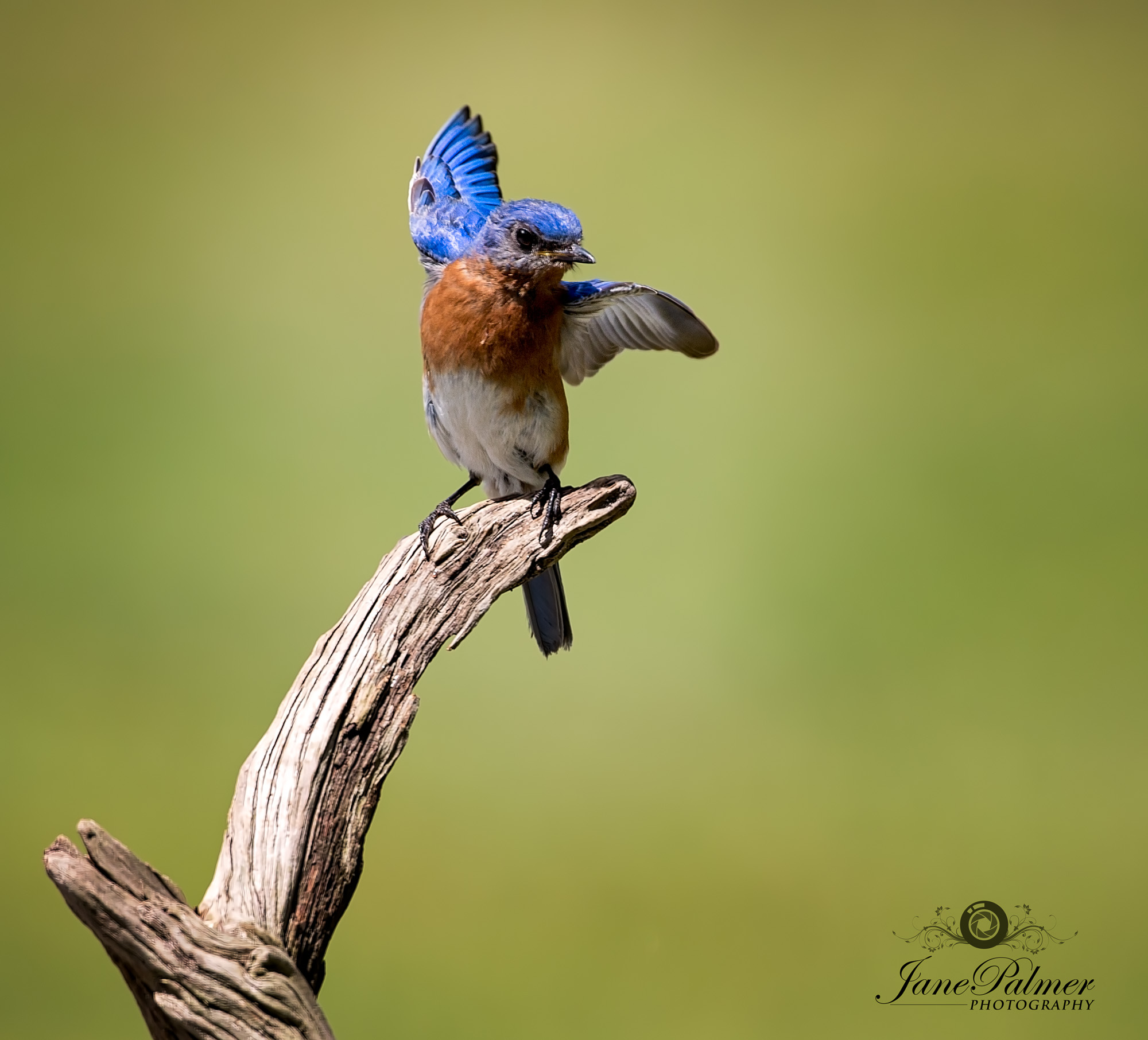 Bird Photography by Jane Palmer