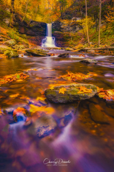 Fall Photography with Vibrance slider in Lightroom set to 100% by Chrissy Donadi