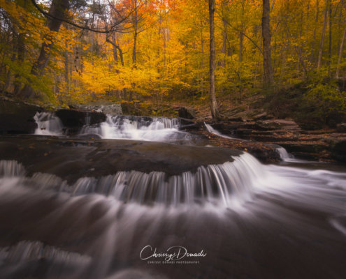 Fall Photography: 3 Simple Post Processing Tips for Autumn Colors Blog Post by Chrissy Donadi