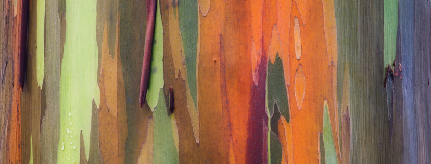 Abstract Nature photography of Rainbow Eucalyptus, Maui by Jay Patel