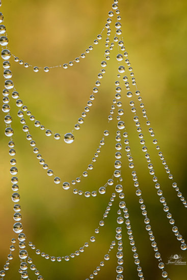 Photographing Inspiration Example - Spider Webs