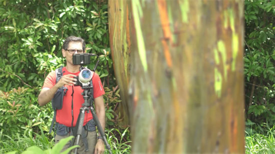 Landscape photographer capturing rainbow eucalyptus at midday, Maui, Hawaii