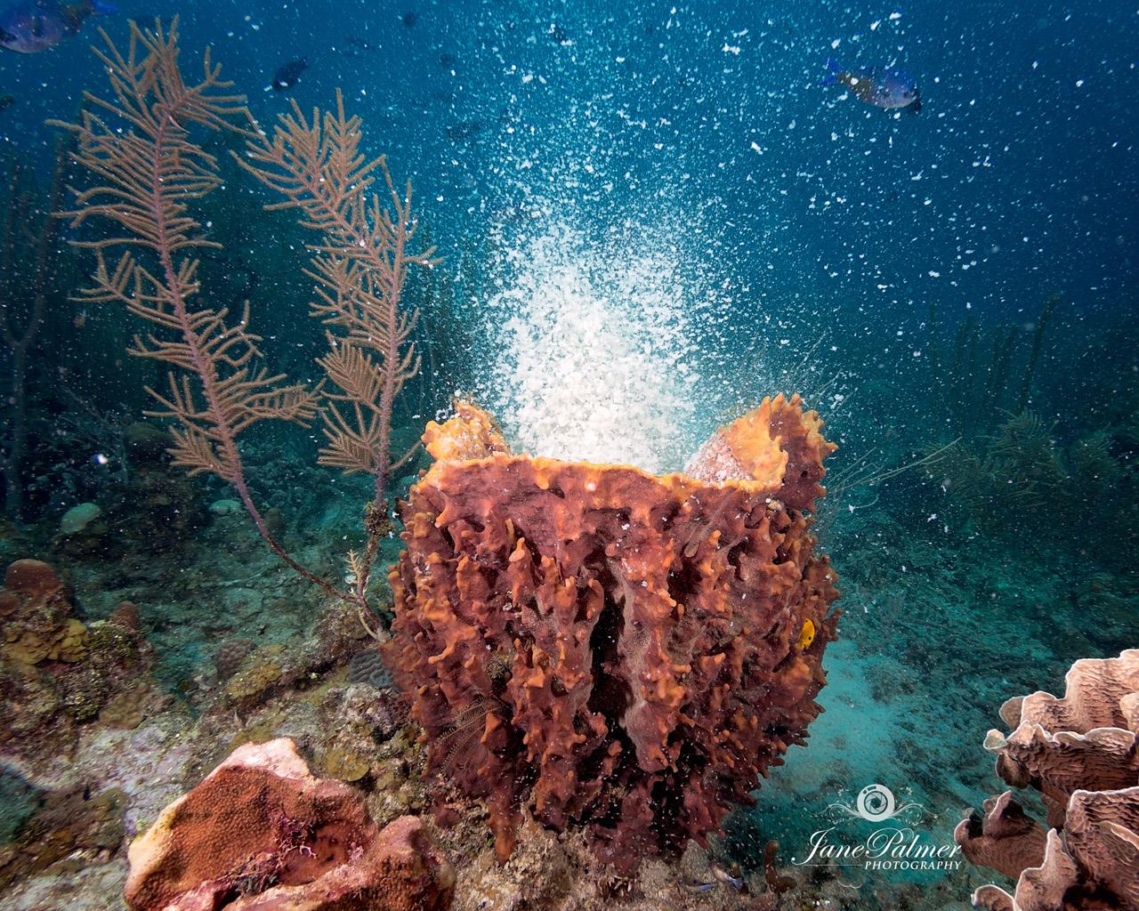 Underwater Photography by Jane Palmer