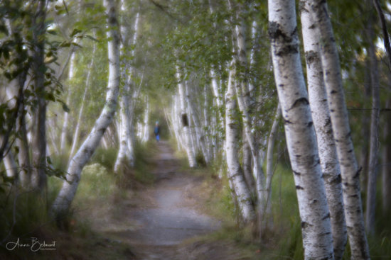 Creative nature photography with Lensbaby's Velvet 85mm Lens