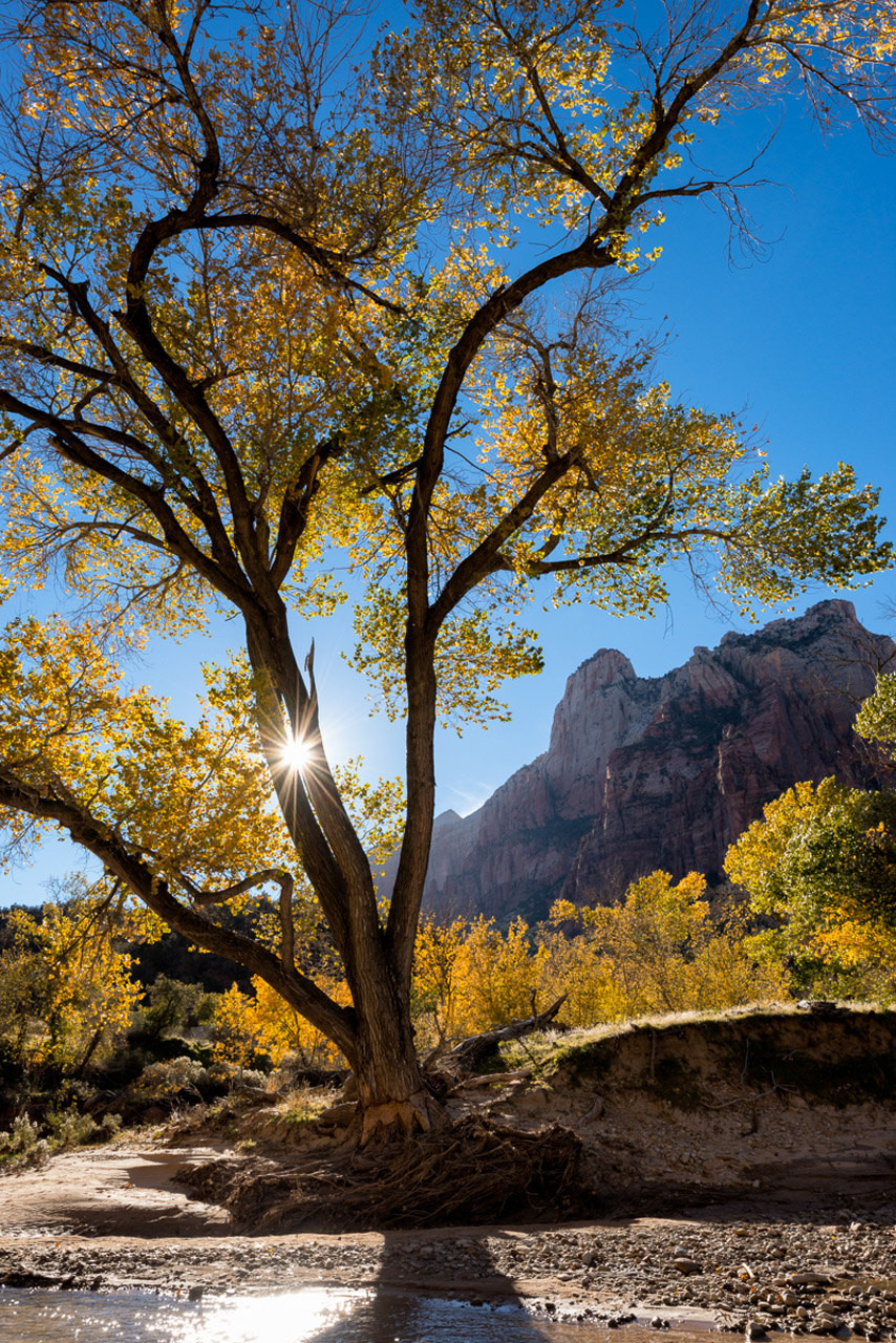 Court of the Patriarchs, Zion National Park by Kate Silvia