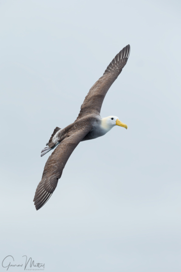 Bird photography using a vertical grip by Gaurav Mittal