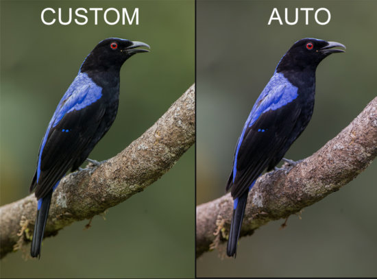 Example of setting your white balance for bird photography