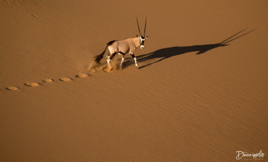 Aerial Photography example: African Gazelle
