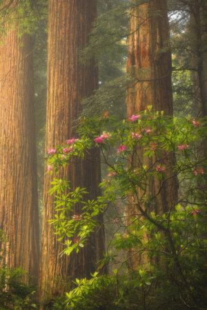 Photographing spring wildflowers in Redwood Forest National Park, California by Joshua Snow