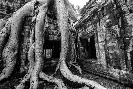 Nature Photography from Ta Prohm, Angkor, Cambodia by Ugo Cei