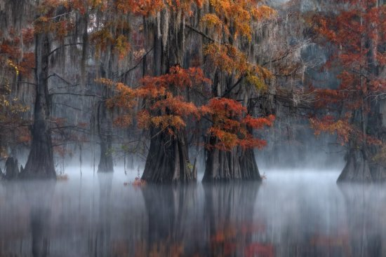 Landscape Photography example of Peak fall colors, Swamps of Southern USA.