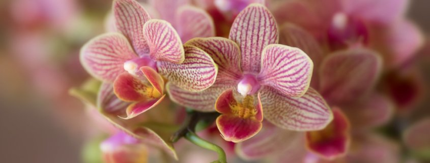 Cover photo for flower photography Blog about photographing orchids by Anne Belmont