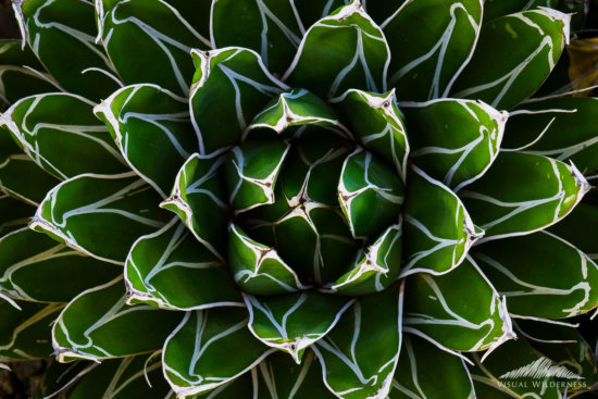 Example of Repetitive Patterns in Macro Photography by David Johnston