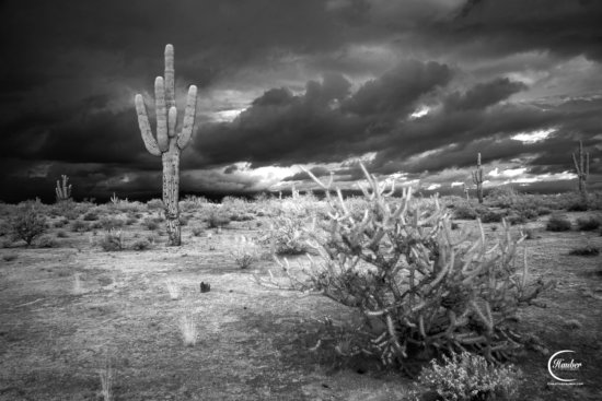 B/W Infrared Photography Example
