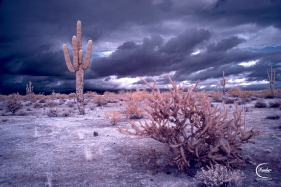 Infrared Photo created with Red and Blue sliders on a Channel Mix.
