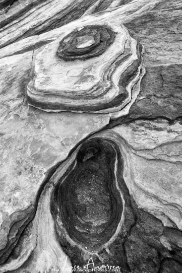 Black and White Nature Photography to enhance shapes.