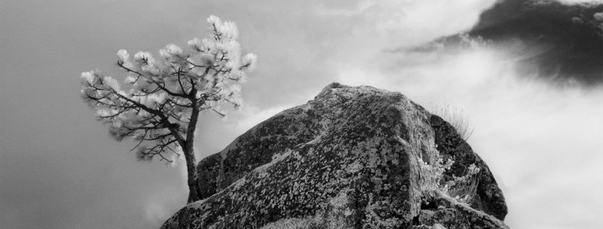Cover photo of Infrared Photography blog article by Christine Hauber