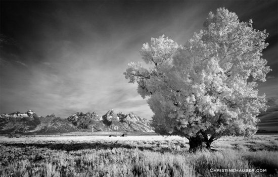 Early morning Infrared Photography in Grand Tetons National Park, Wyoming
