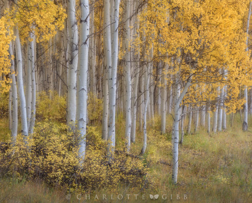 Intimate Landscape photography by Charlotte Gibb