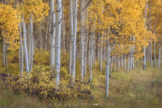 Intimate Landscape Photography in shade by Charlotte Gibb