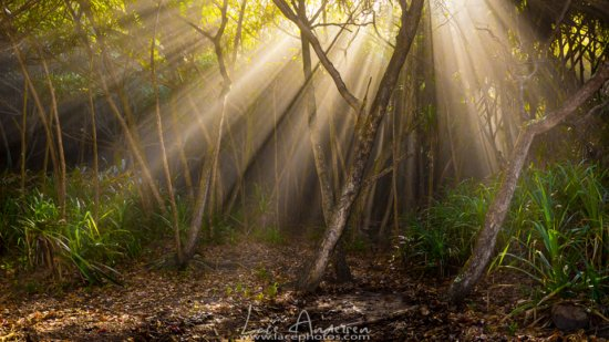 Tree Photography Example: Sun Beams in Forest