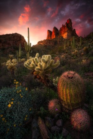 Spring photography with desert wildflower at sunset by Joshua Snow